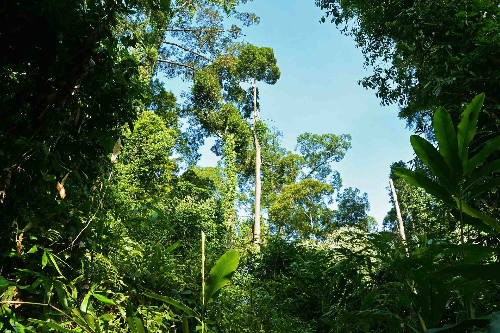 Best Time to Travel to Borneo